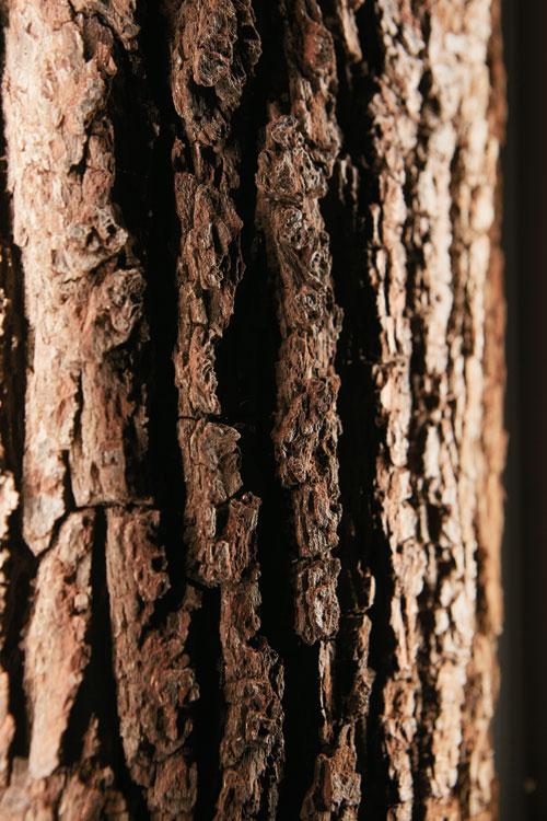 Hartmann Runa Baumrinde Detail